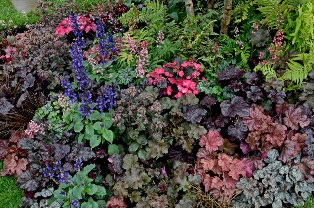 Гейхеры в саду могут создать пышный и яркий фон, как самостоятельно, так и с парнерами