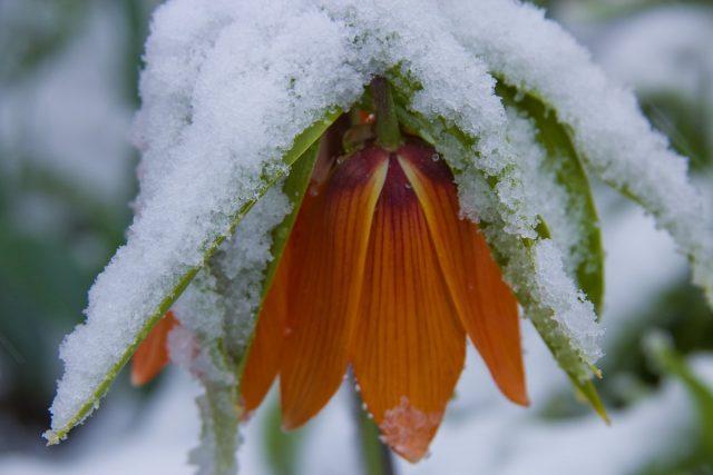 В наших краях серьезные морозы могут вернуться даже в разгар календарной весны