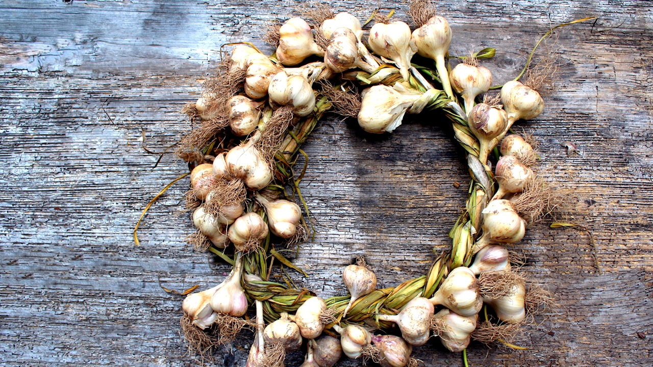 Как хранить чеснок, чтобы он остался свежим до нового урожая