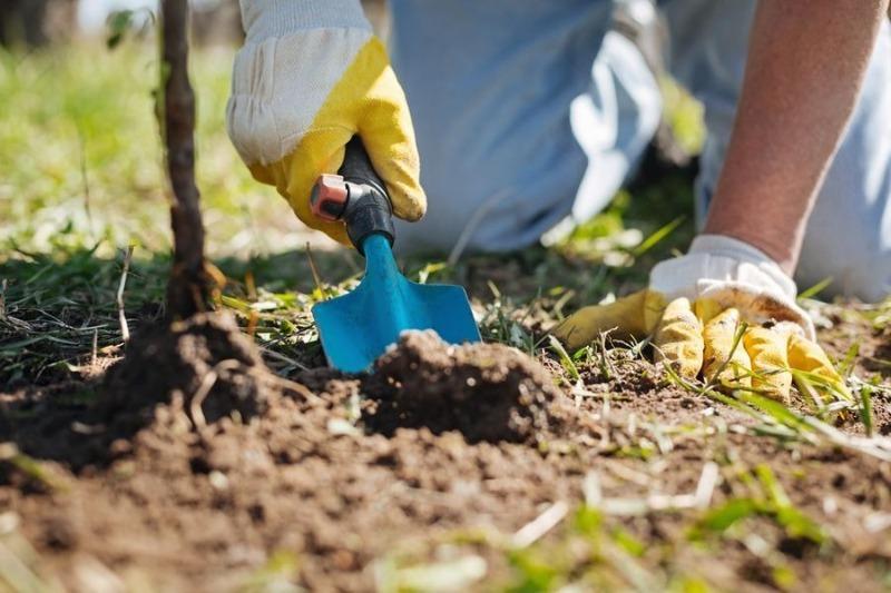 Какие органические удобрения лучше всего вносить для подкормки плодовых деревьев осенью