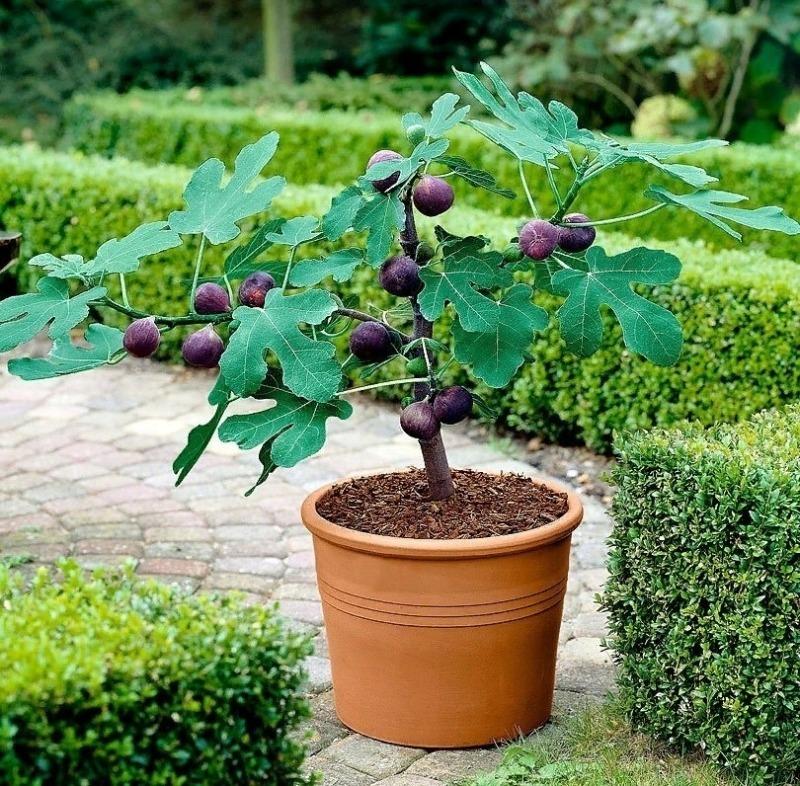 Какие экзотические фрукты можно вырастить из косточки прямо дома