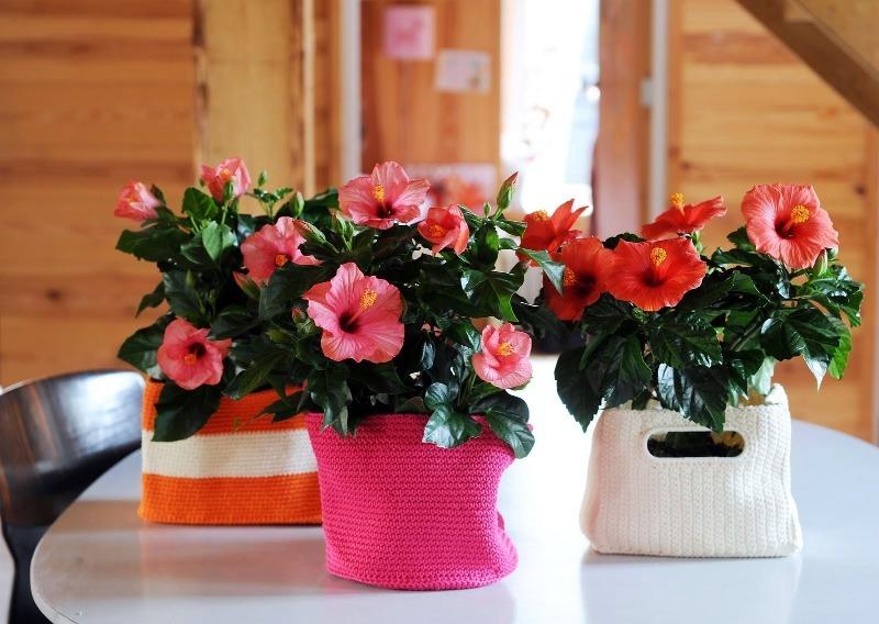 11 растений, которые помогут украсить каждую комнату вашего дома, даже ванну