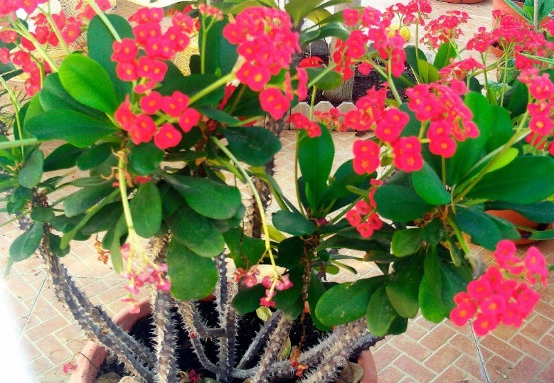 7 растений, которые не пропадут даже у самых ленивых хозяек