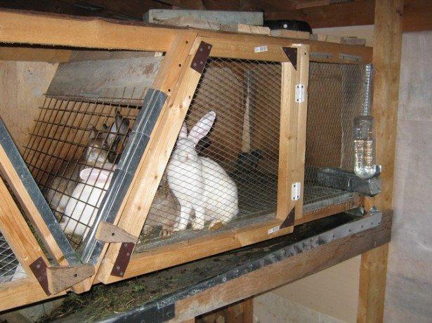 На фото кролики в клетке