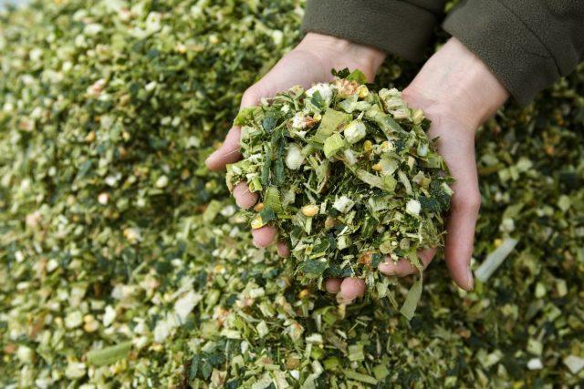 Силос готовится просто — в подготовленную ёмкость или рукав помещают мелко измельчённое свежее сено, ботву, капустные листья, луговую траву, стебли