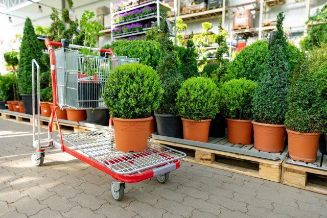 Как купить семена и саженцы и не потратить лишнего?