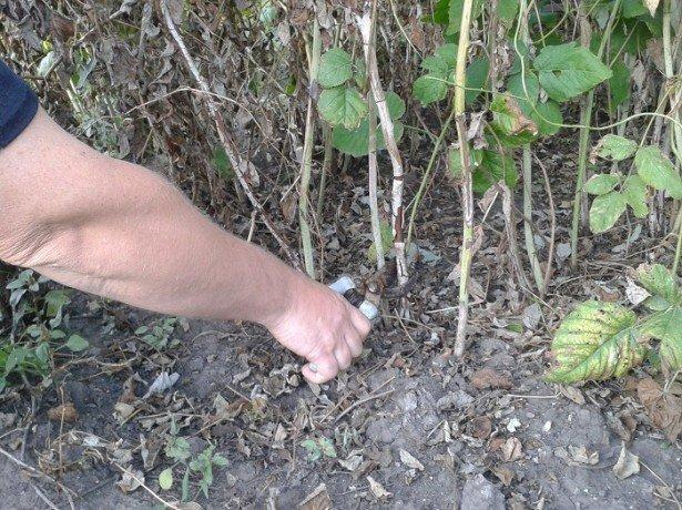 Подробная инструкция — как обрезать малину осенью? фото