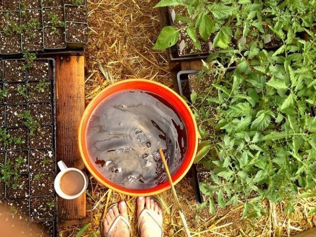 Перед посевом или посадкой проводят обработку семян и рассады рабочими растворами «Байкал ЭМ-1», согласно описанным технологиям