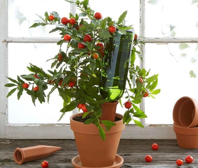 Как позаботиться о комнатных растениях, отправляясь в отпуск