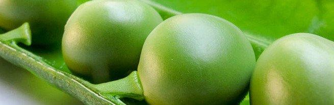 Как сушить горох на семена – заготовка посевного материала