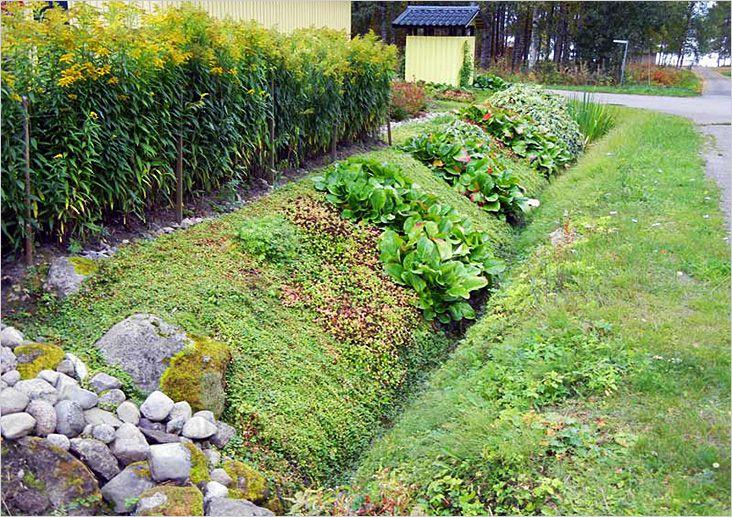 Где посадить красную смородину на даче?