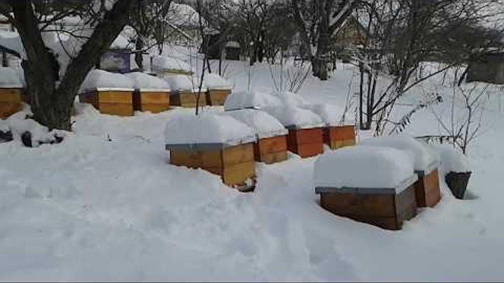 Основные правила успешной зимовки пчел