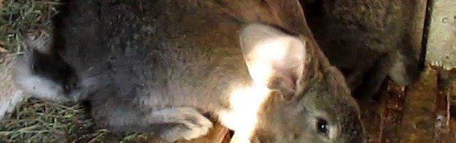 Клетки для кроликов своими руками – основные принципы и этапы