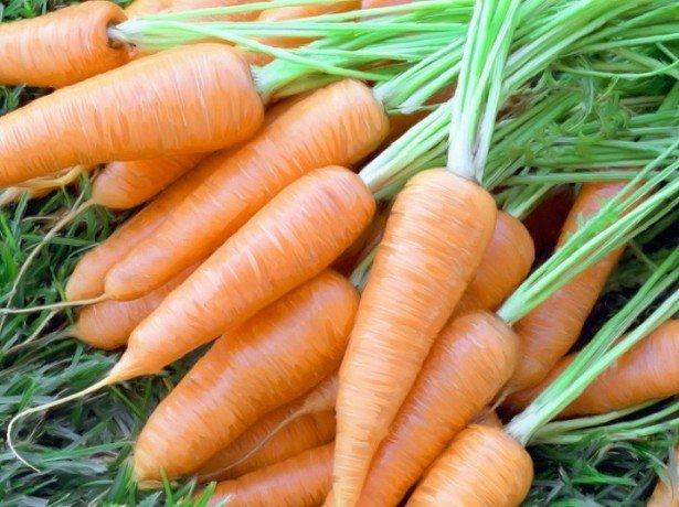 Когда нужно собирать морковь? фото