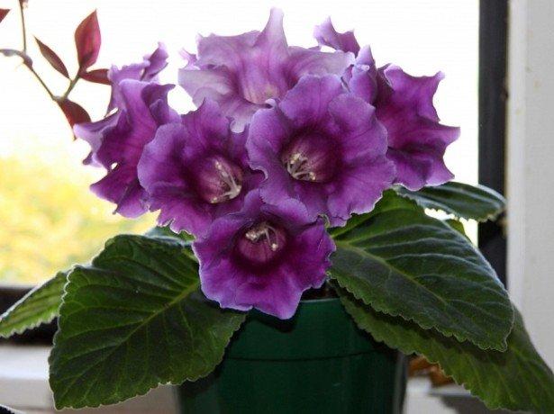 Секреты невероятной красоты цветка