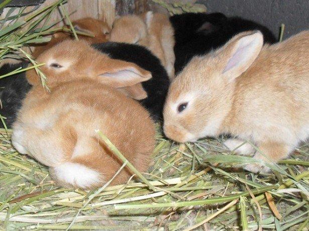 На фотографии кролики в клетке