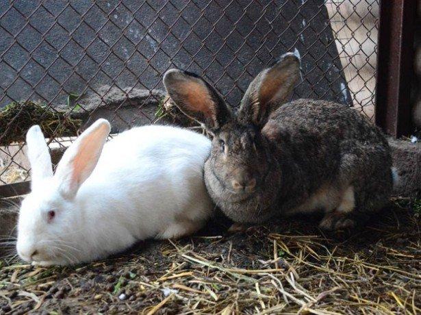На фотографии кроли