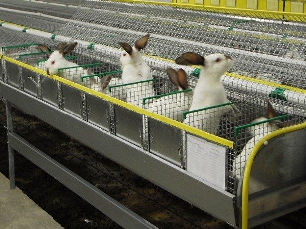 Фотография кролей