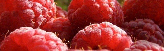Малина Патриция — отзывы садоводов о преимуществах и недостатках сорта