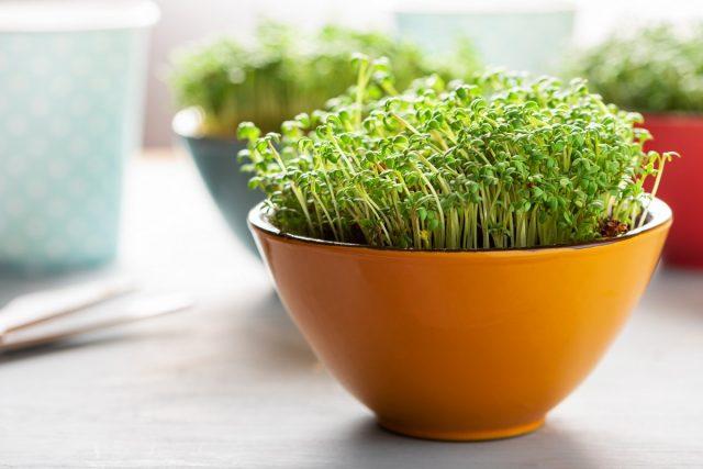 Микрозелень дома — простые правила выращивания
