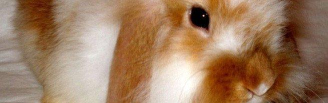 Необходимые прививки, которые могут спасти жизнь кроликам