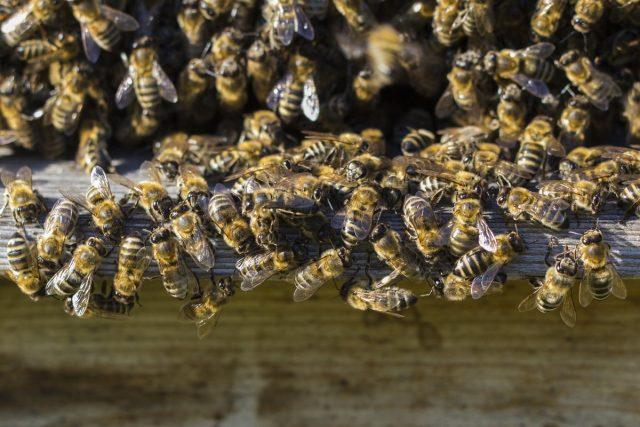 Столпотворение пчел началось утром