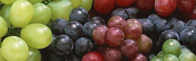Выращиваем саженцы винограда с умом, экономим время и деньги