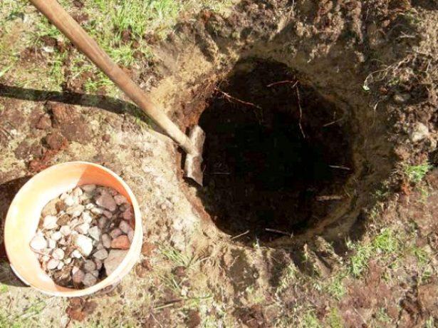 Подготовка ямы для посадки жимолости