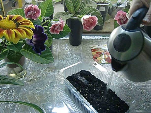 Обработка семян кипятком