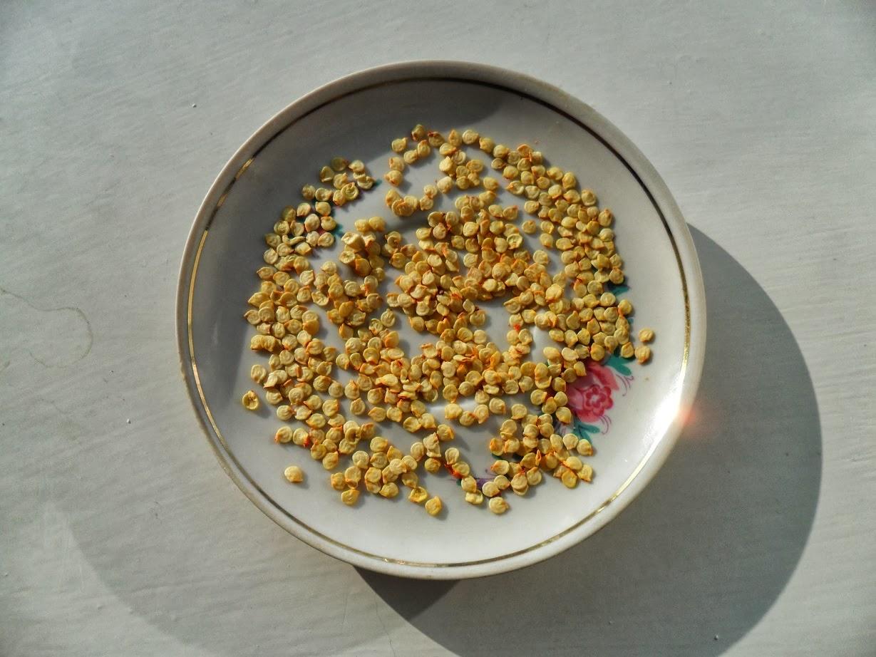 Проращивание семян перца: проверенные и новые способы