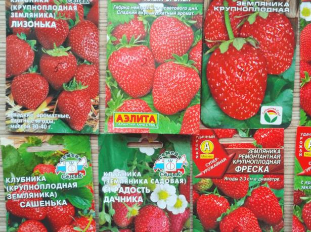 Популярные сорта семян садовой земляники