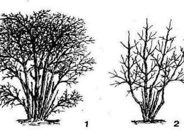 Вырезание старых ветвей