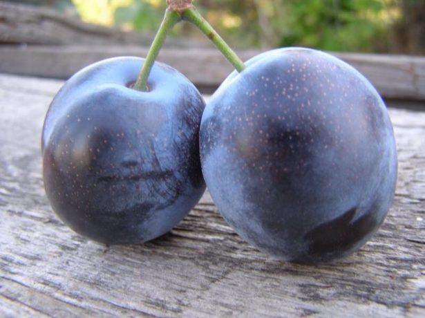 Плоды сливы Блюфри