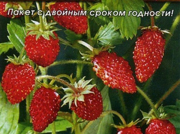 Семена замляники Александрия от фирмы «Аэлита»