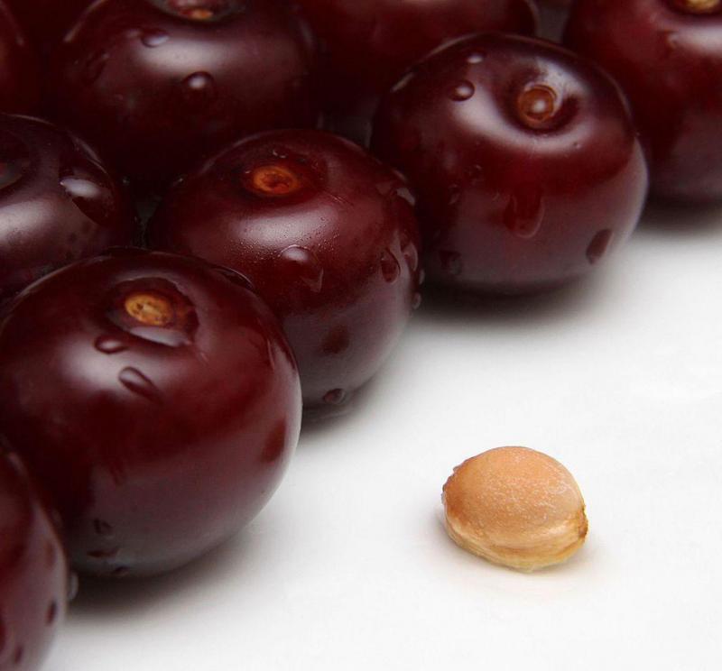 Загадка вишнёвой косточки: как вырастить из неё саженец вишни