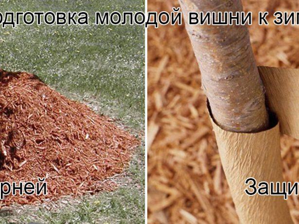 Подготовка деревца к зиме