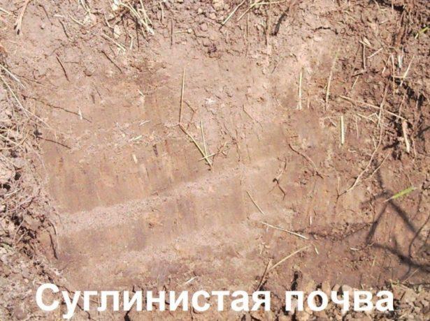 Суглинистая почва