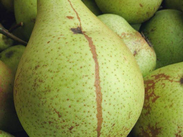 Плоды груши Кюре