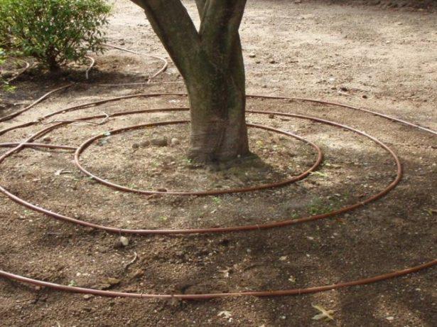 Капельный полив дерева