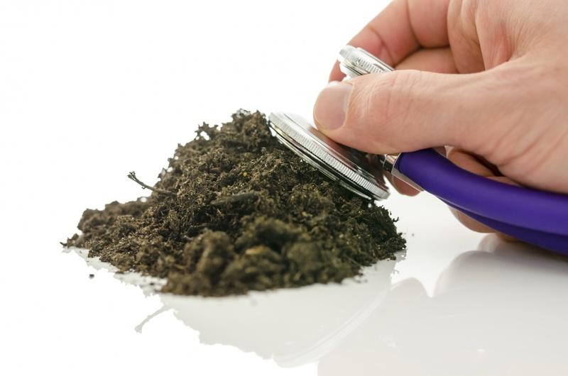 Грамотное обеззараживание рассадного грунта — залог здоровой рассады