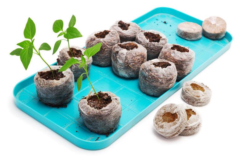 Как торфяные таблетки облегчают выращивание перечной рассады