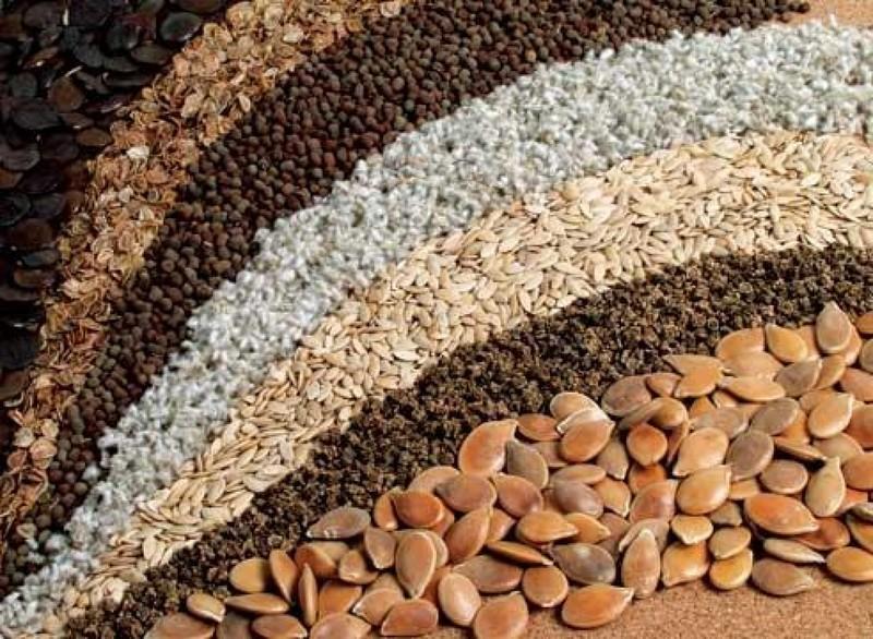 Старые семена лучше всходят? правда о моркови и других культурах
