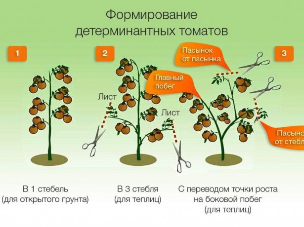 Формирование томатов в один, два и три стебля