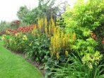 Бузульник и другие растения