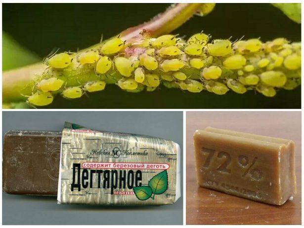 Дегтярное и хозяйственное мыло против тли