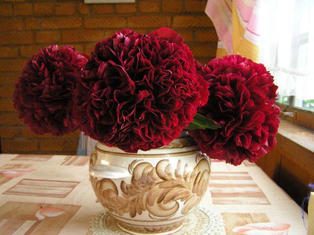 Пион шаровидный розовидный Ред Грейс (Red Grace)