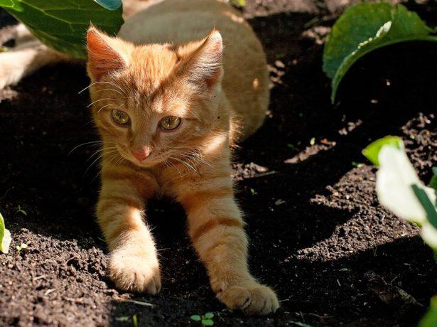 кот летом на даче