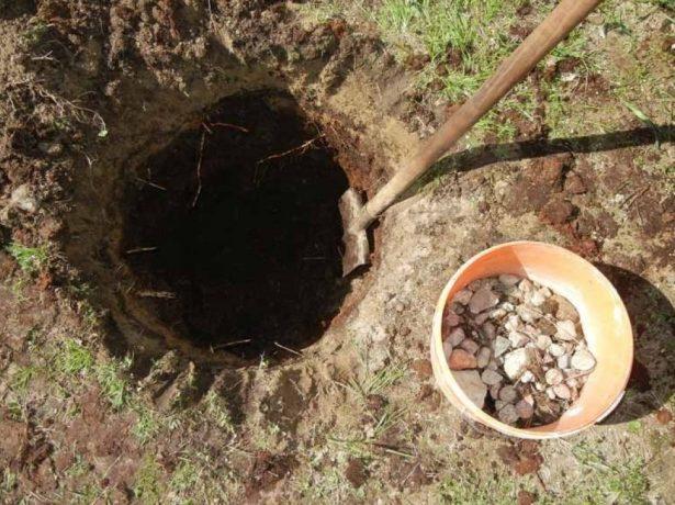 Посадочная яма для абрикоса
