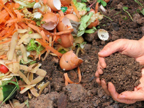 Пищевые отходы в компосте