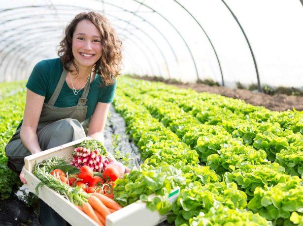 Девушка в теплице с ящиком овощей